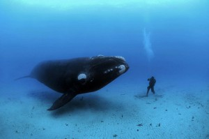 Under water by Brian Skerry1546211_414224902117936_488540832258543548_n